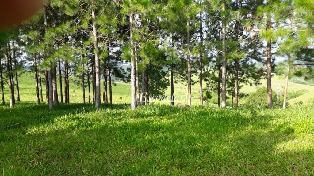 Terreno à venda, 25000 m² por R$ 260.000,00 - Ouro Fino - Santa Isabel/SP