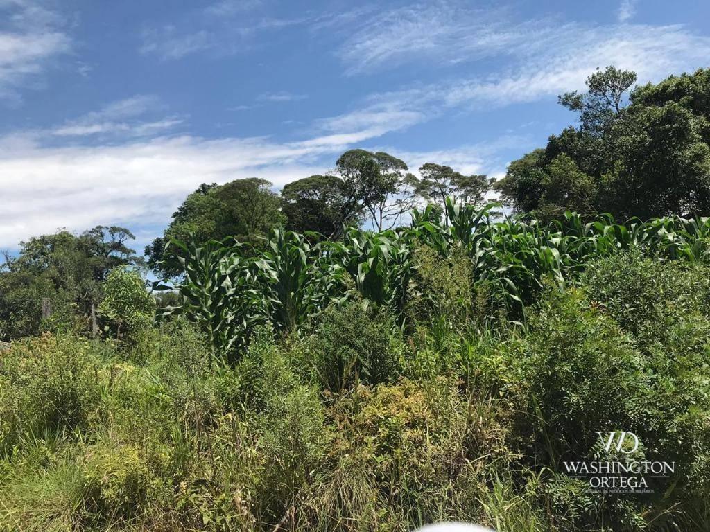 Chácara à venda, 37440 m² por R$ 350.000 - Colônia Murici - São José dos Pinhais/PR
